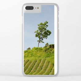 Tree, Azores Island Clear iPhone Case