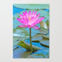 Pink Water Lily Flower - Nature Photography Canvas Print