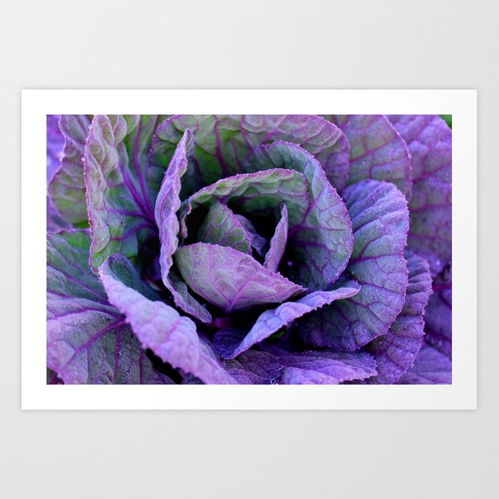 Purple Frost Art Print
