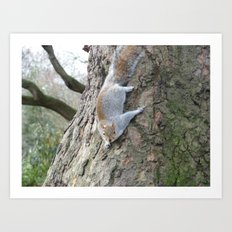 Squirrel Gymnastics Art Print