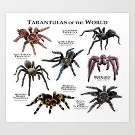 Tarantulas of the World Art Print