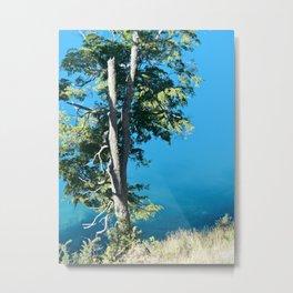 Nature 1 Metal Print