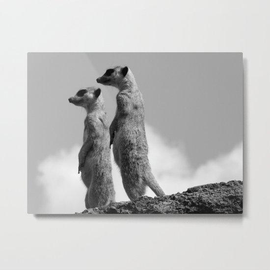 Meerkats, Fuerteventura. Metal Print