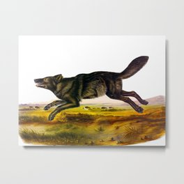 Black Wolf Vintage Illustration Metal Print