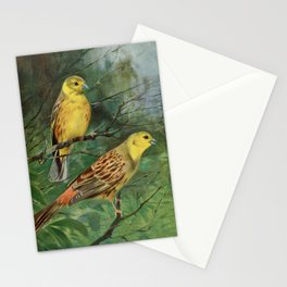 Kuhnert, Friedrich Wilhelm (1865-1926) - Wild Life of the World 1916 v.1 (Yellow Bunting) Stationery Cards