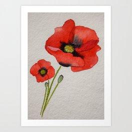 Watercolour Poppies Art Print