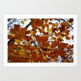 Autumn Leaves Art Print