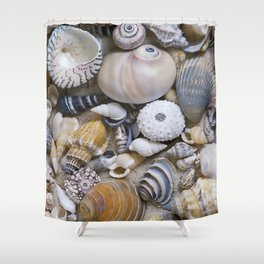 Sea Shell Collection Shower Curtain