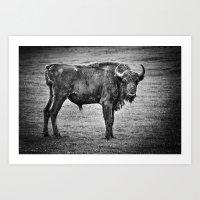 buffalo Art Prints featuring Buffalo by davehare