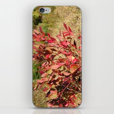 Plants on the powerlines iPhone & iPod Skin