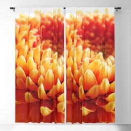 Orange Germini Close Up 2 Blackout Curtain
