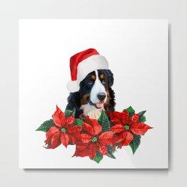 Santa Claus Bernese Dog between Poinsettia Flowers #christmas Metal Print