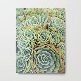 Succulentville Metal Print