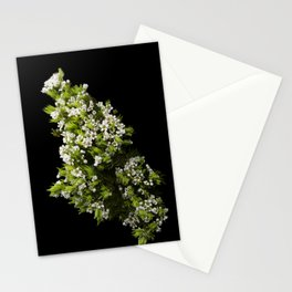 Diosma White Cape Flowers Stationery Cards