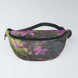 Garden designed by the nature - Viscaria vulgaris, clammy campion Fanny Pack