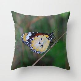 Plain Tiger (Danaus chrysippus) Throw Pillow
