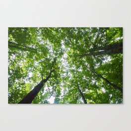 Up Through The Trees Canvas Print