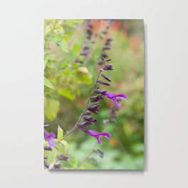 Salvia Metal Print