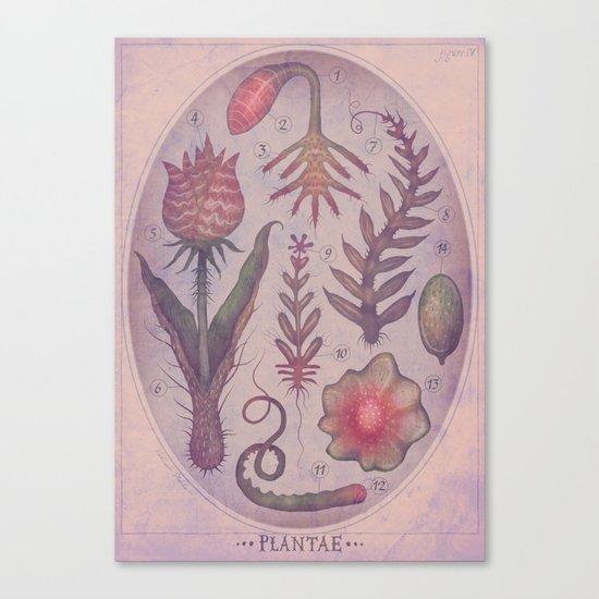 PLANTAE IV Canvas Print