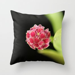 Platystele umbellata Throw Pillow
