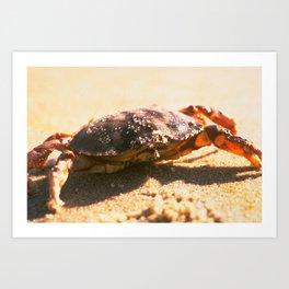 Crab on The Beach Photograph Art Print