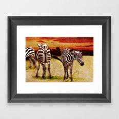The Zebras Framed Art Print