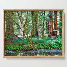 Muir Woods Study 11 Serving Tray