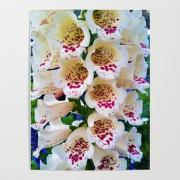 Lovely Spotted Flowers Poster
