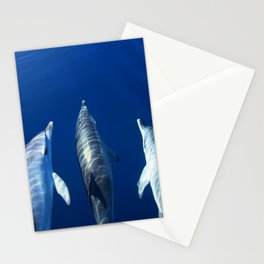 Playful and friendly dolphins Stationery Cards