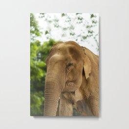Elephant Nature Park Metal Print