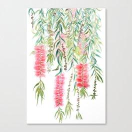 bottle brush tree flower Canvas Print