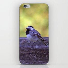 White Wagtail 4123 iPhone Skin