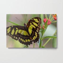 A Butterfly Metal Print