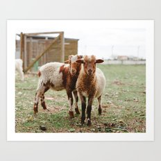 Counting Sheep Art Print
