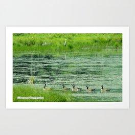 Blue Heron Keeping The Geese In Line Art Print