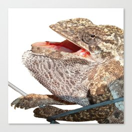 A Chameleon With Open Mouth Isolated Canvas Print