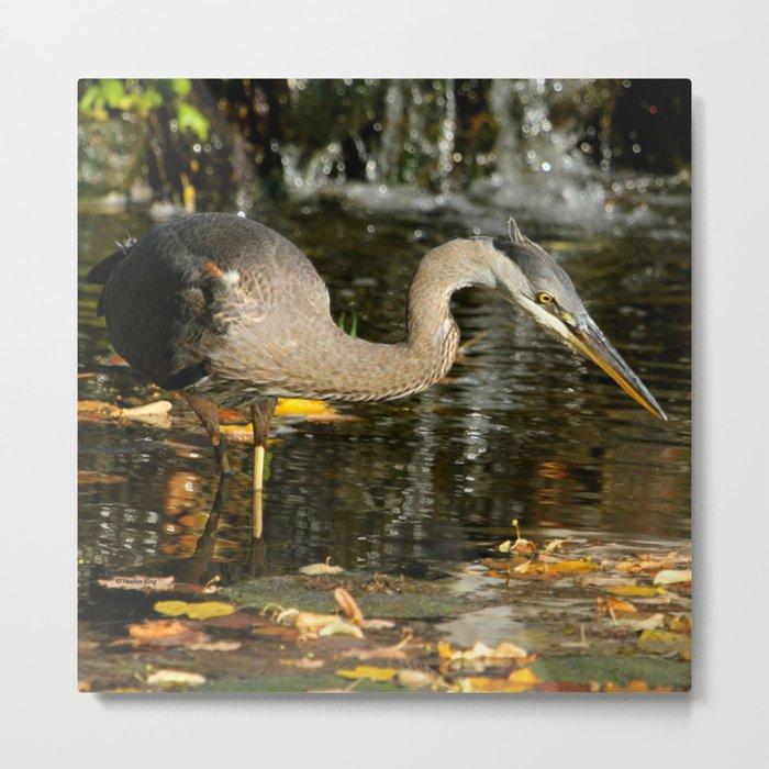 Stalking the pond Metal Print