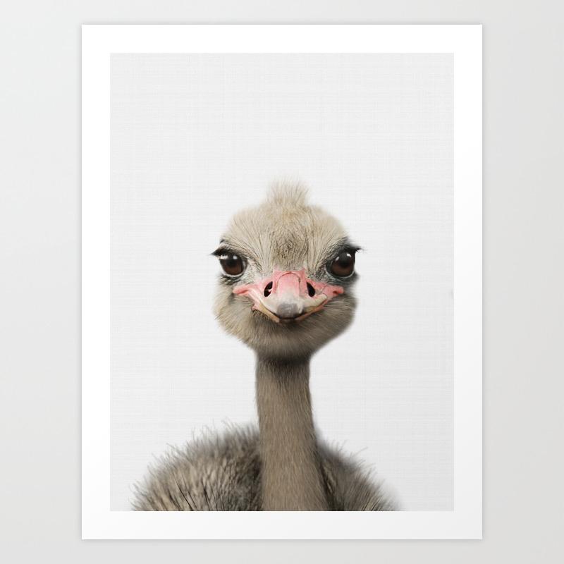 - Ostrich Print, Baby Animal Nursery Art, Animal Prints, Nursery