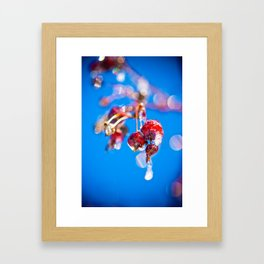Tree Fruit Covered in Ice Framed Art Print