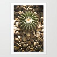 Round Cactus Art Print