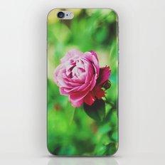 The Rose Garden iPhone & iPod Skin