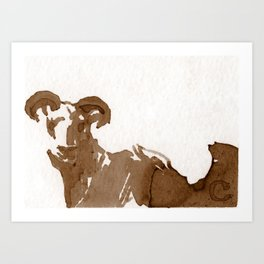 Longhorn Sheep Art Print