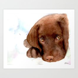 Chocolate Lab Puppy Art Print