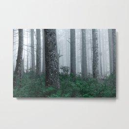 Foggy Forest Adventure Metal Print