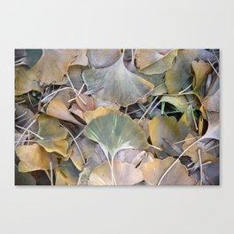 Fall Ginko Leaves Canvas Print