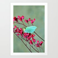 butterfly Art Prints featuring butterfly by  Agostino Lo Coco
