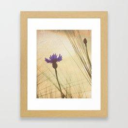 FLOWER Bluebottle Framed Art Print