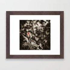 Vintage Rose Framed Art Print
