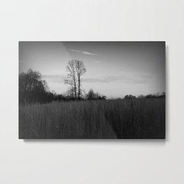 Twin Trees (B&W) Metal Print