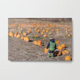 Searching For A Pumpkin Metal Print
